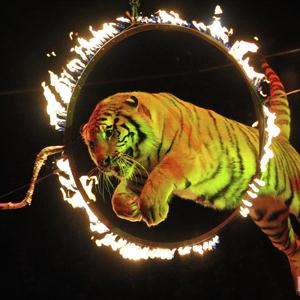 Цирки Красноармейска