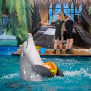 Дельфинарии, океанариумы Красноармейска