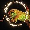 Цирки в Красноармейске