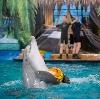 Дельфинарии, океанариумы в Красноармейске