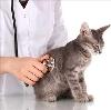 Ветеринарные клиники в Красноармейске